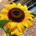 真夏の屋外温度の測定